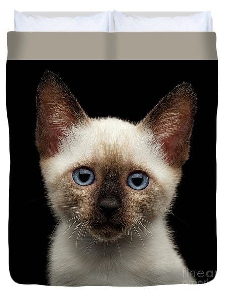 Mekong Bobtail Kitty With Blue Eyes On Isolated Black Background Duvet Cover by Sergey Taran