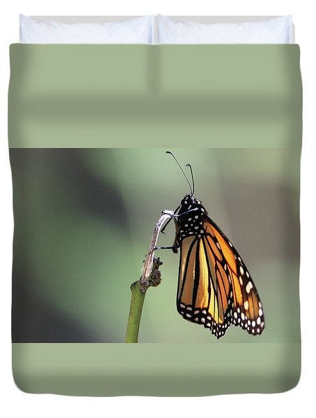 Monarch Butterfly Stony Brook New York Duvet Cover
