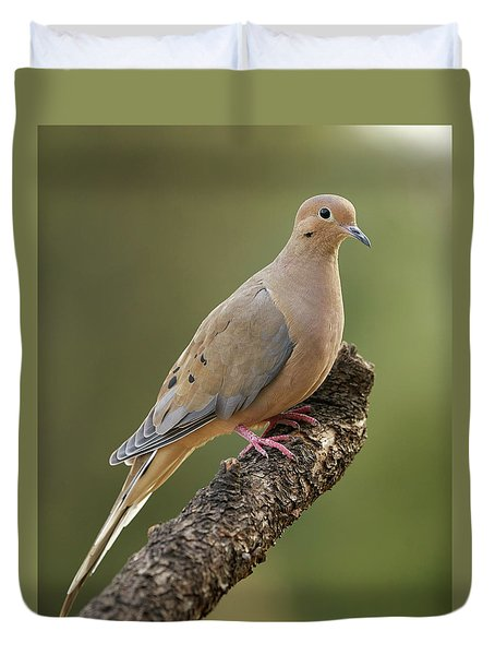 Mourning Dove Duvet Cover by Doug Herr