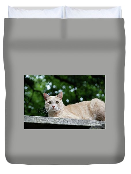 Orange Tabby Duvet Cover