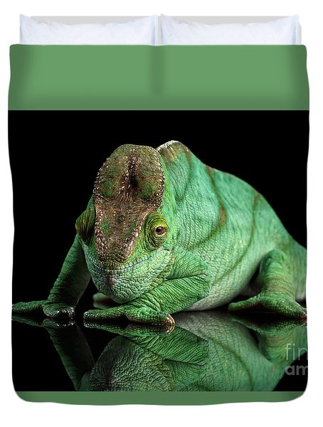 Parson Chameleon, Calumma Parsoni Orange Eye On Black Duvet Cover by Sergey Taran