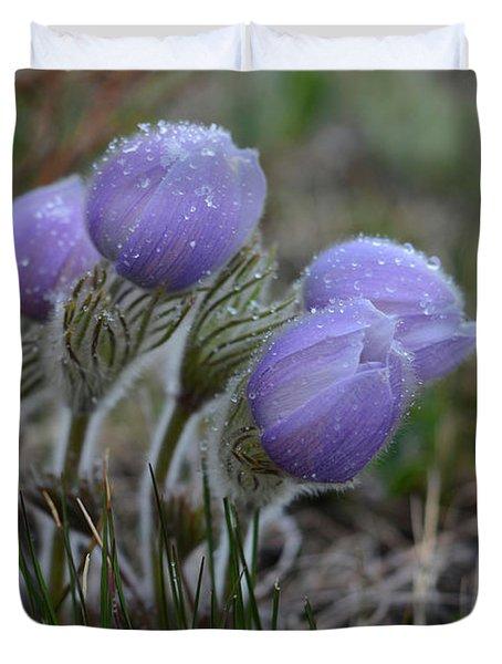 Pasque Flowers  Duvet Cover
