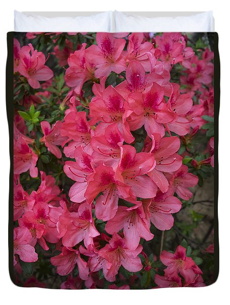 Pink Azaleas Duvet Cover by Frank Wilson