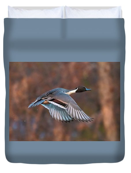 Duvet Cover featuring the photograph Pintail  by Kelly Marquardt