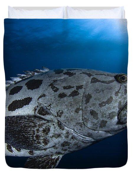 Potato Grouper, Australia Duvet Cover by Todd Winner