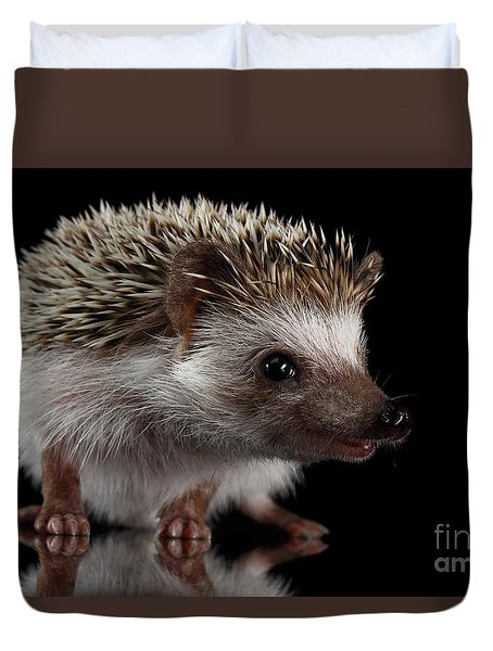 Prickly Hedgehog Isolated On Black Background Duvet Cover by Sergey Taran