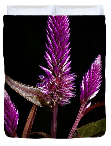 Purple Duvet Cover by Christopher Holmes