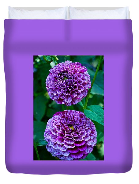 Purple Passion Dahlia  Duvet Cover