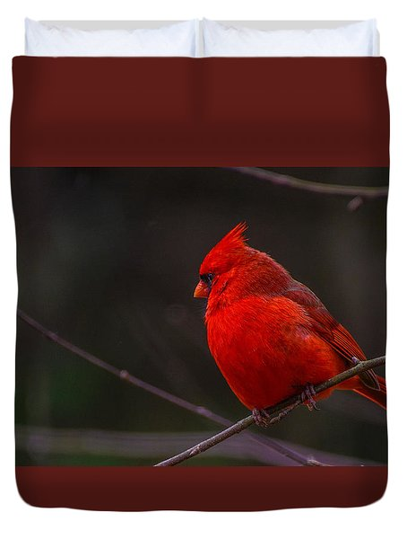 Quality Quiet Time  Duvet Cover by John Harding