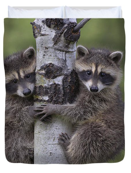 Duvet Cover featuring the photograph Raccoon Two Babies Climbing Tree North by Tim Fitzharris