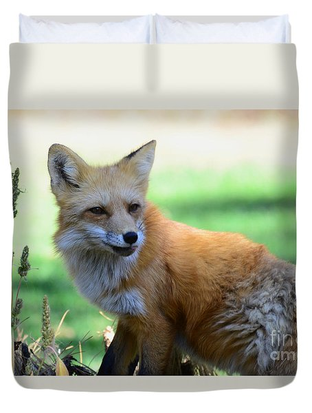 Red Fox Duvet Cover by Debby Pueschel