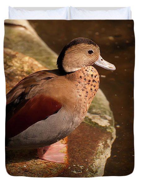 Duvet Cover featuring the photograph Ringed Teal On A Rock by Chris Flees