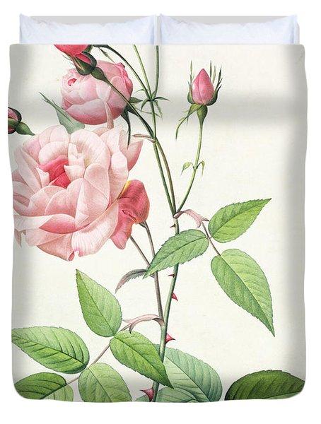 Rosa Indica Vulgaris Duvet Cover