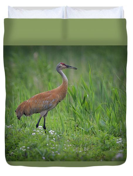 Sandhill Crane Duvet Cover by Gary Hall