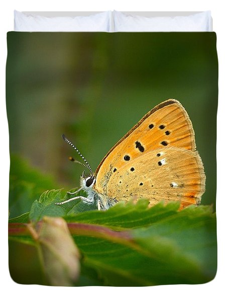 Duvet Cover featuring the photograph Scarce Copper by Jouko Lehto