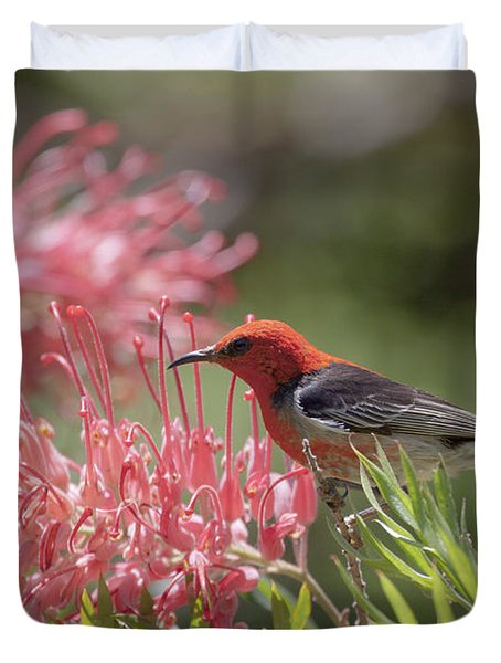Scarlet Honeyeater Duvet Cover