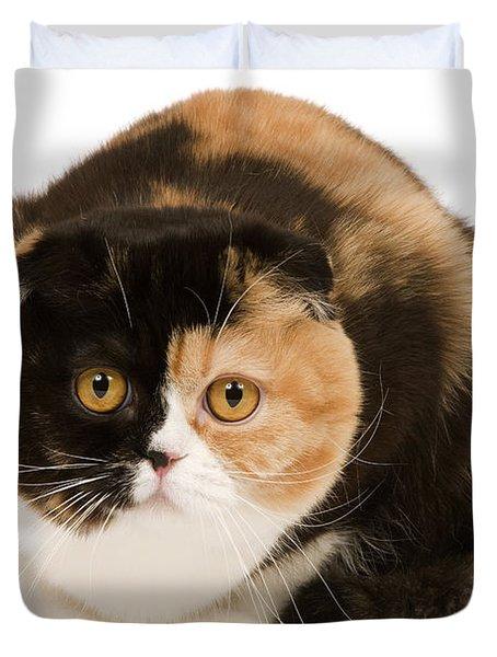 Scottish Fold Cat Duvet Cover