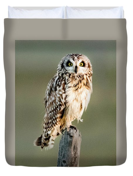 Short Eared Owl Duvet Cover