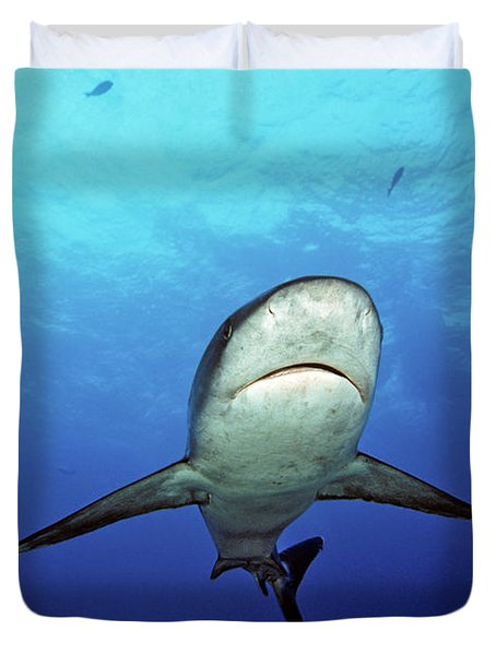 Silvertip Shark Duvet Cover by Dave Fleetham - Printscapes