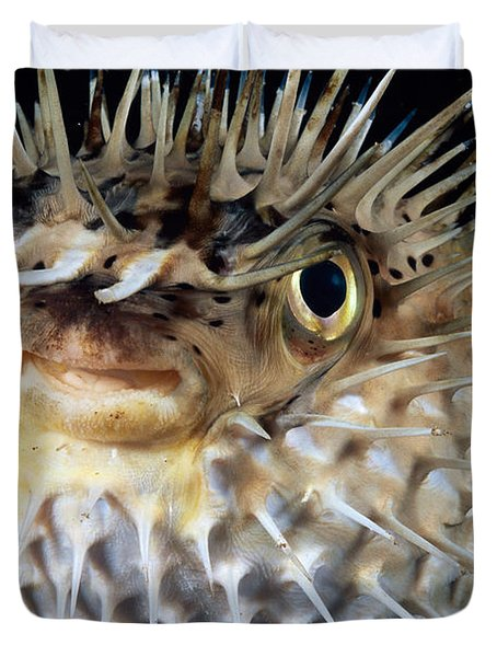 Spiny Puffer Duvet Cover by Dave Fleetham - Printscapes