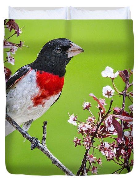 Spring Grosbeak Duvet Cover