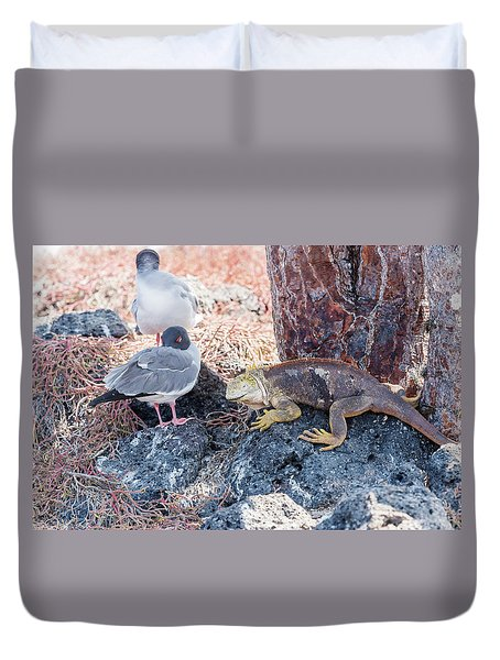 Swallow Tailed Gull And Iguana On  Galapagos Islands Duvet Cover