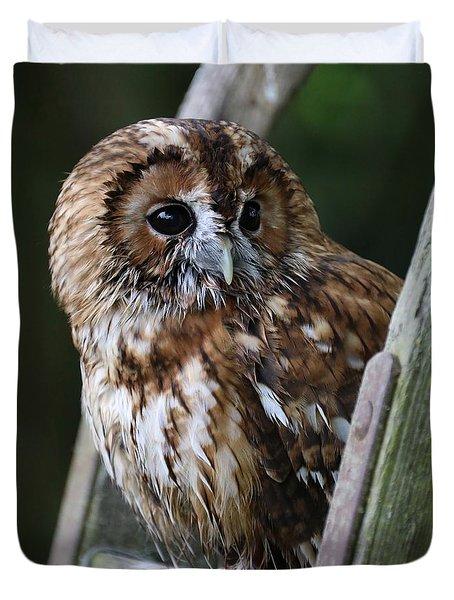 Tawny Owl Duvet Cover