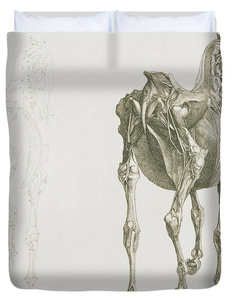 The Anatomy Of The Horse Duvet Cover