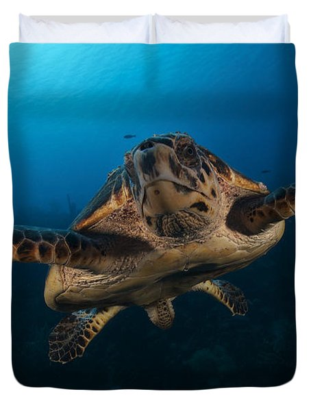 The Hawksbill Sea Turtle, Bonaire Duvet Cover by Terry Moore