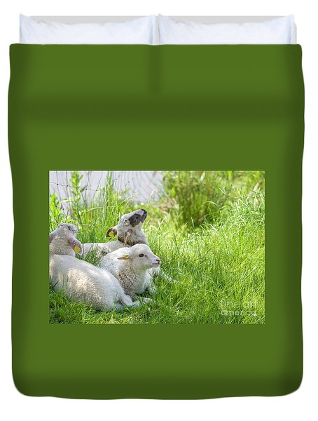 Duvet Cover featuring the photograph Three Little Lambs by Patricia Hofmeester