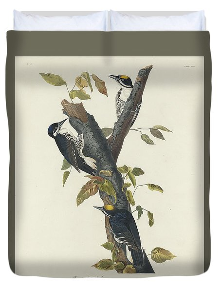 Three-toed Woodpecker Duvet Cover by Rob Dreyer