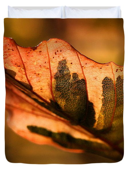 Duvet Cover featuring the photograph Tri-color Beech In Autumn by Angela Rath