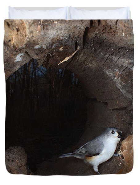 Tufted Titmouse In A Log Duvet Cover by Ted Kinsman