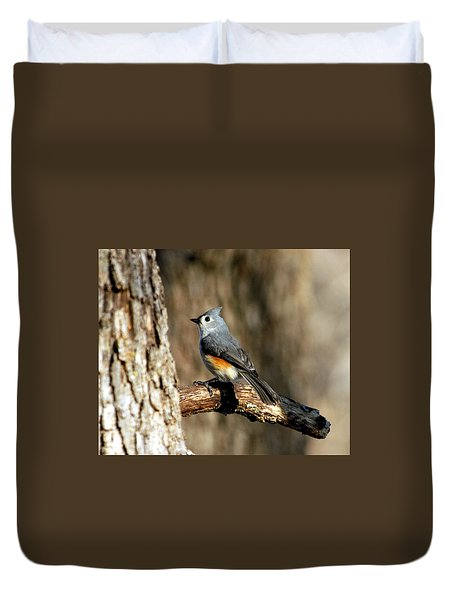 Tufted Titmouse On Branch Duvet Cover by Sheila Brown