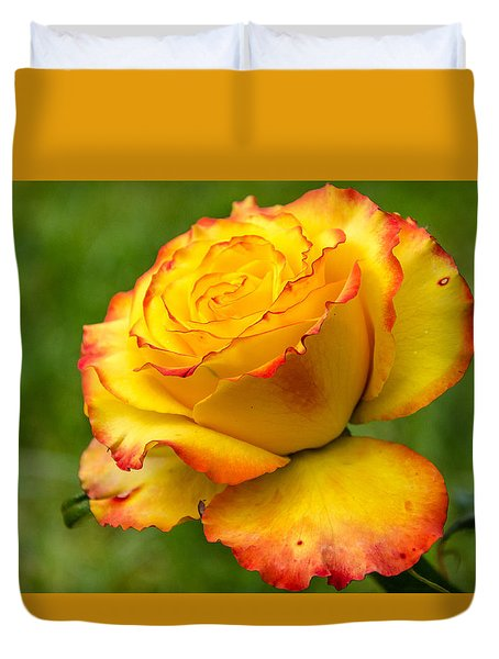 Two Toned Rose  Duvet Cover