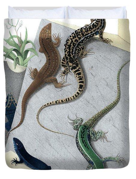 Varieties Of Wall Lizard Duvet Cover