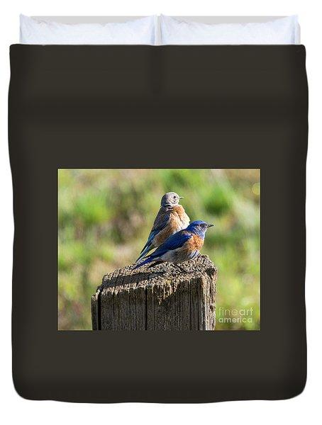 Western Bluebird Pair Duvet Cover by Mike Dawson