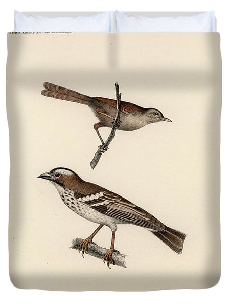 White-browed Sparrow-weaver And Grass Or Bush Warbler Duvet Cover