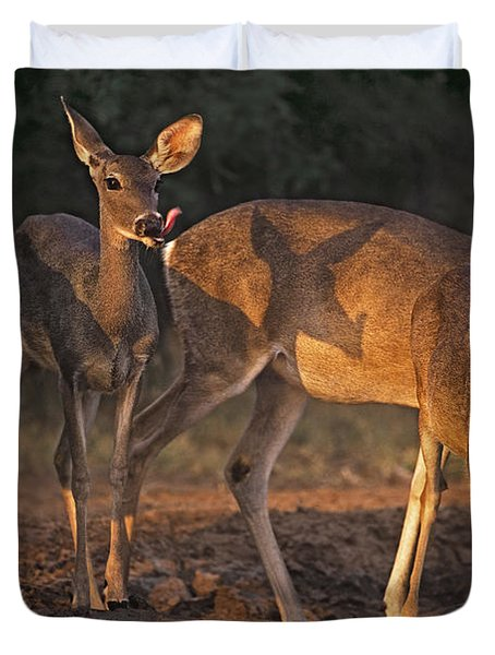 Duvet Cover featuring the photograph Whitetail Deer At Waterhole Texas by Dave Welling