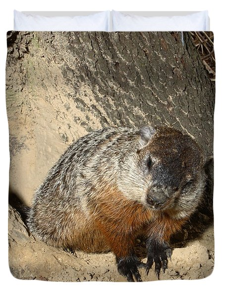 Woodchuck Duvet Cover by Ted Kinsman