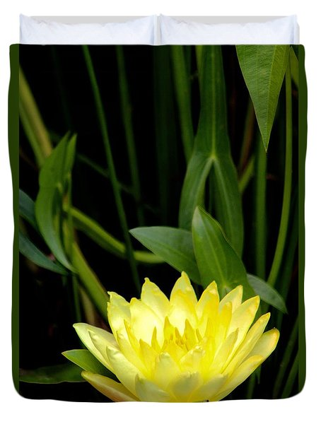 Duvet Cover featuring the photograph Yellow Lotus by Debra     Vatalaro
