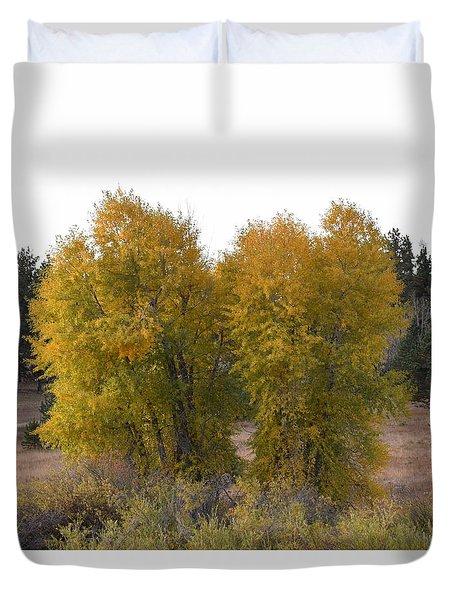 Aspen Trees In The Fall Co Duvet Cover