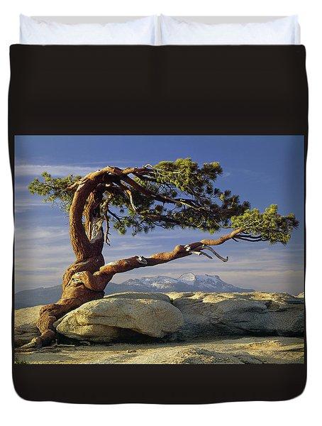 1m6701 Historic Jeffrey Pine Sentinel Dome Yosemite Duvet Cover