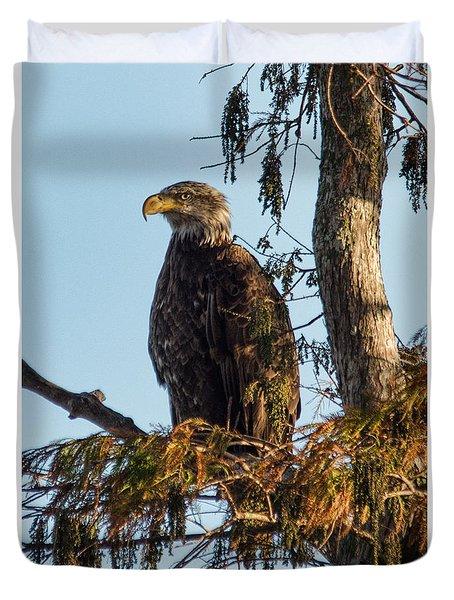 Duvet Cover featuring the photograph Juvenile American Bald Eagle by John Black