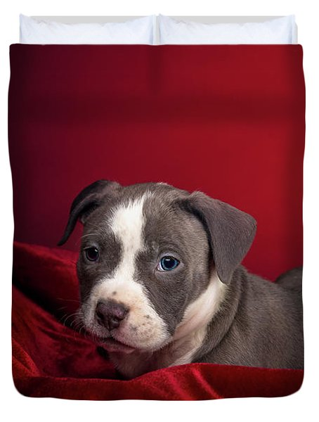 American Pitbull Puppy Duvet Cover by Peter Lakomy