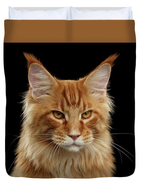 Angry Ginger Maine Coon Cat Gazing On Black Background Duvet Cover