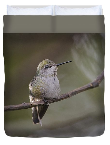 Anna's Hummingbird Duvet Cover by Kathy King