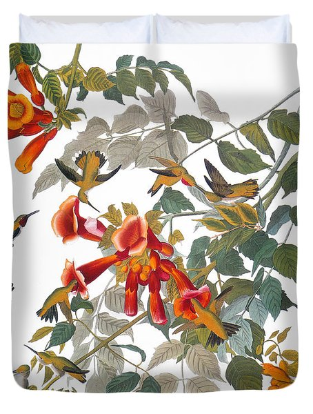 Audubon: Hummingbird Duvet Cover by Granger