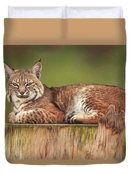 Bobcat  Duvet Cover by Brian Cross
