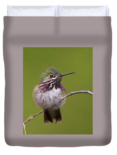 Calliope Hummingbird Duvet Cover by Doug Herr